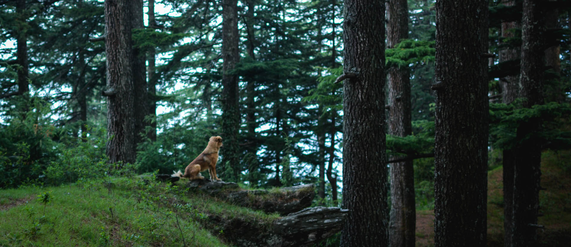 Tirthan Valley – An Unexplored Paradise in Himachal Pradesh
