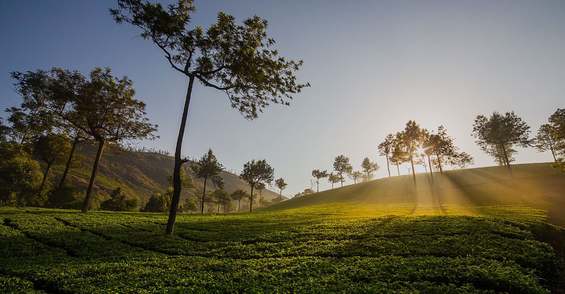 Munnar – Of Misty Mountains and Tea Trails