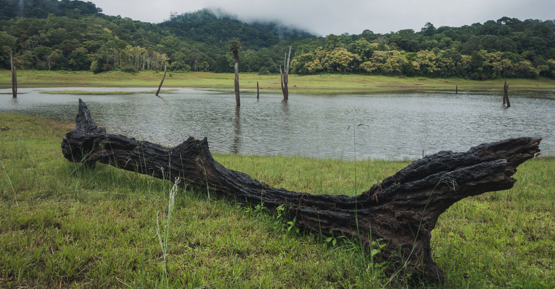 Thekkady – Cat Prowling and Spice Hunting