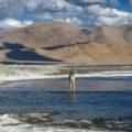 Tso Kar Lake Leh Ladakh