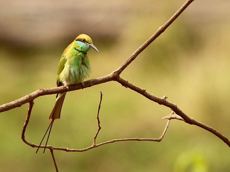 birds at Bandhavgarh