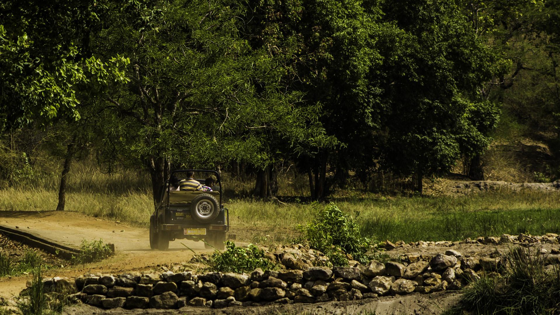 The Wild Side of Bandhavgarh