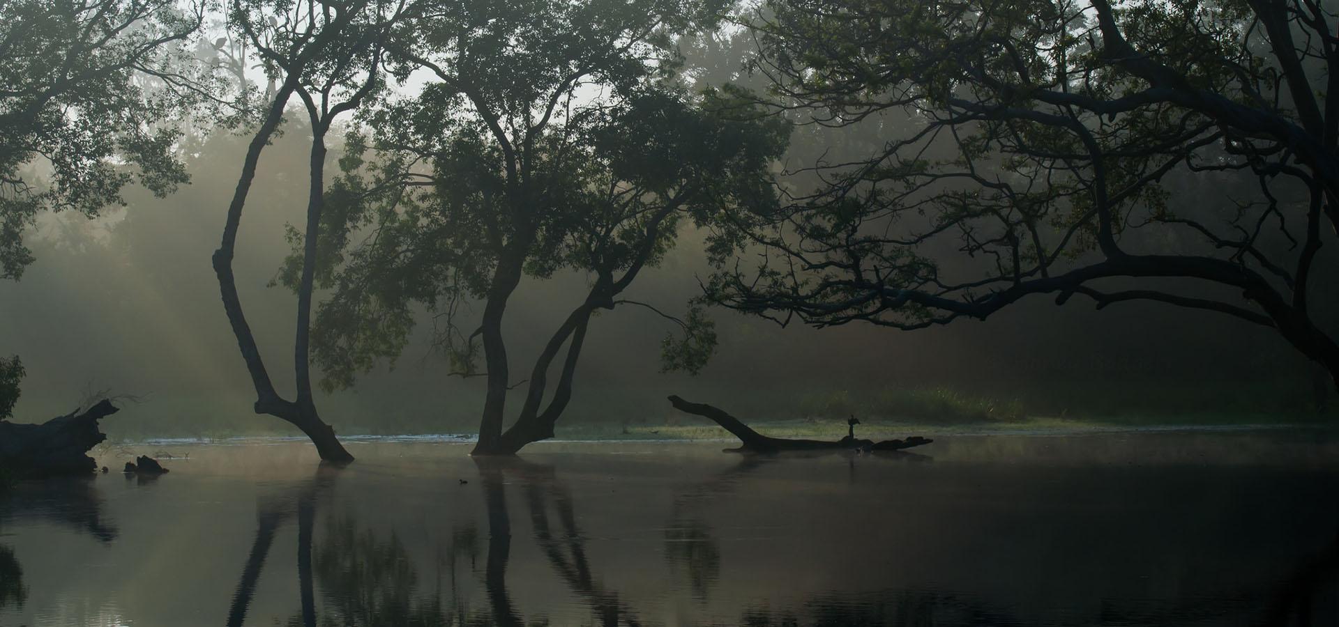 6 reasons why wildlife enthusiasts fall for Sri Lanka
