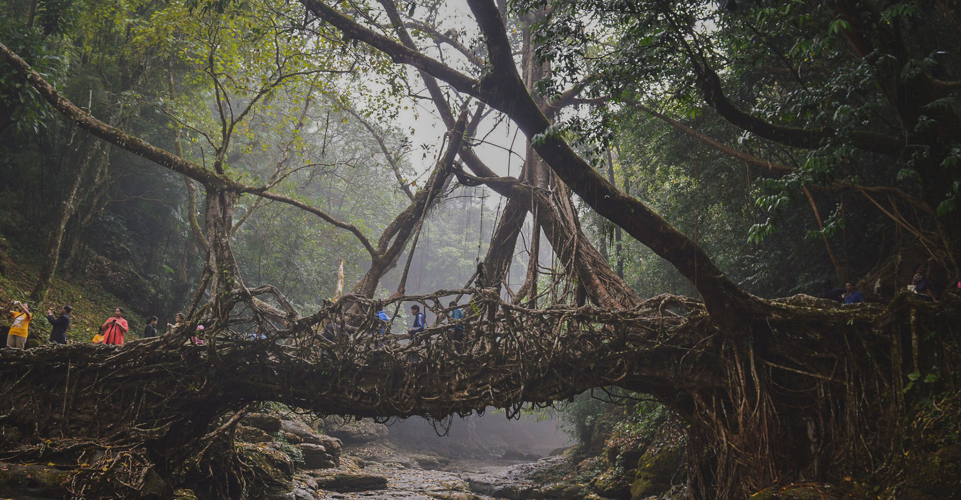 The Story Behind the Living Roots Bridges