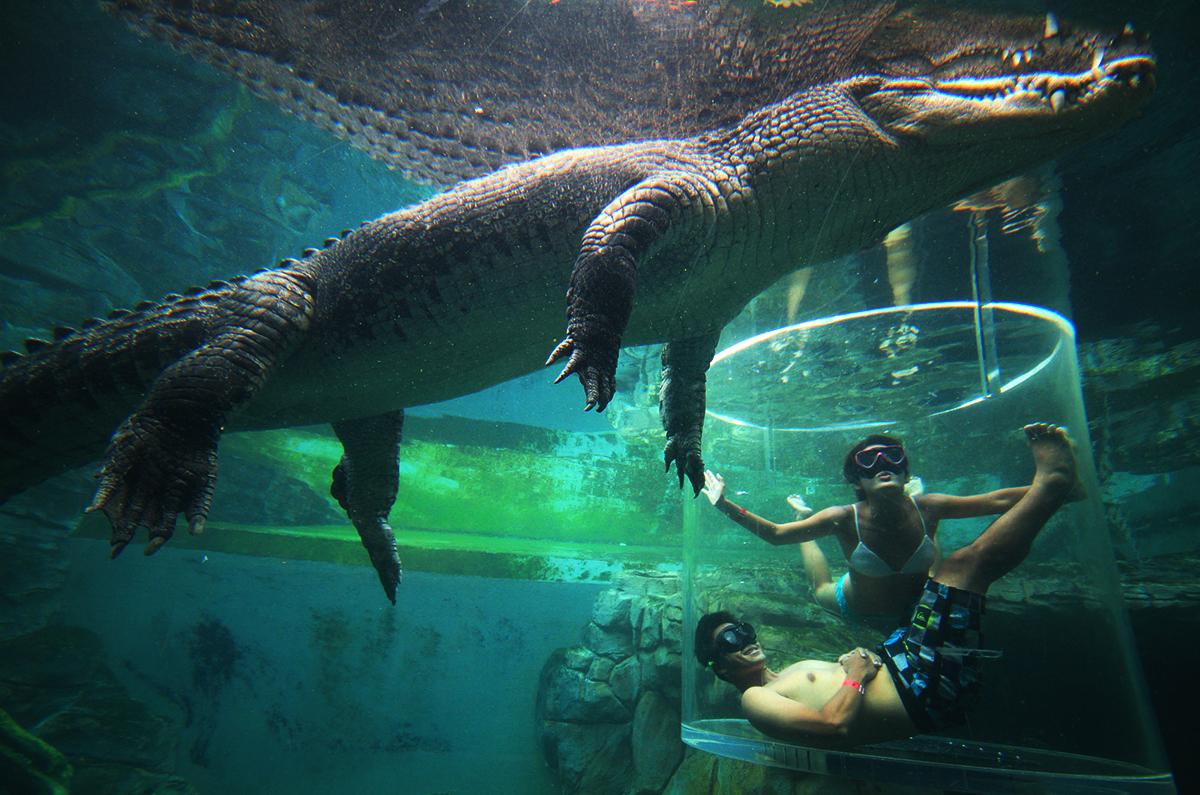 Crocodile cage Honeymoon Experience