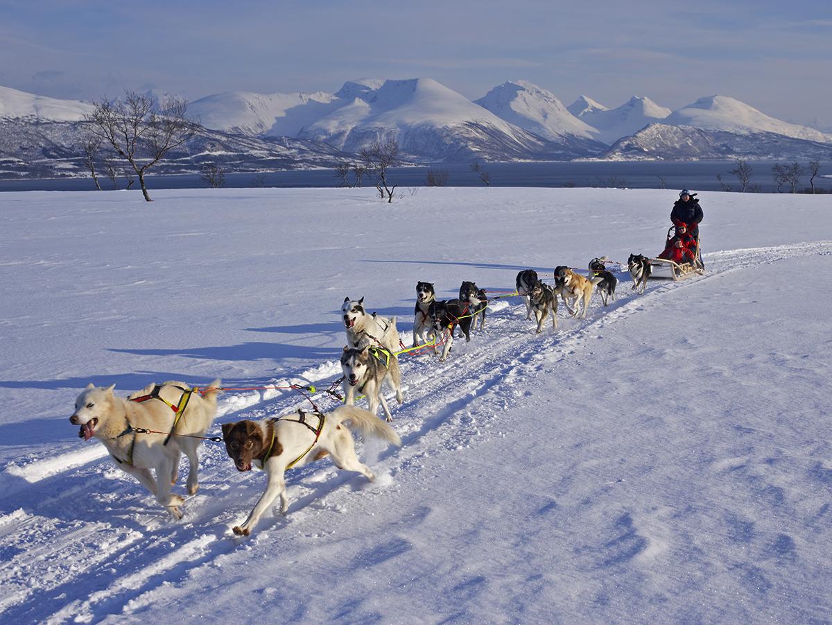 Husky Sledding Norway honeymoon