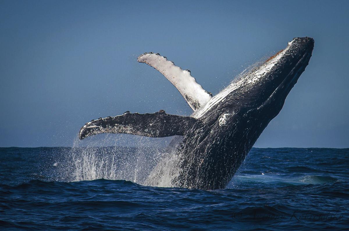 southafrica whale watching honeymoon