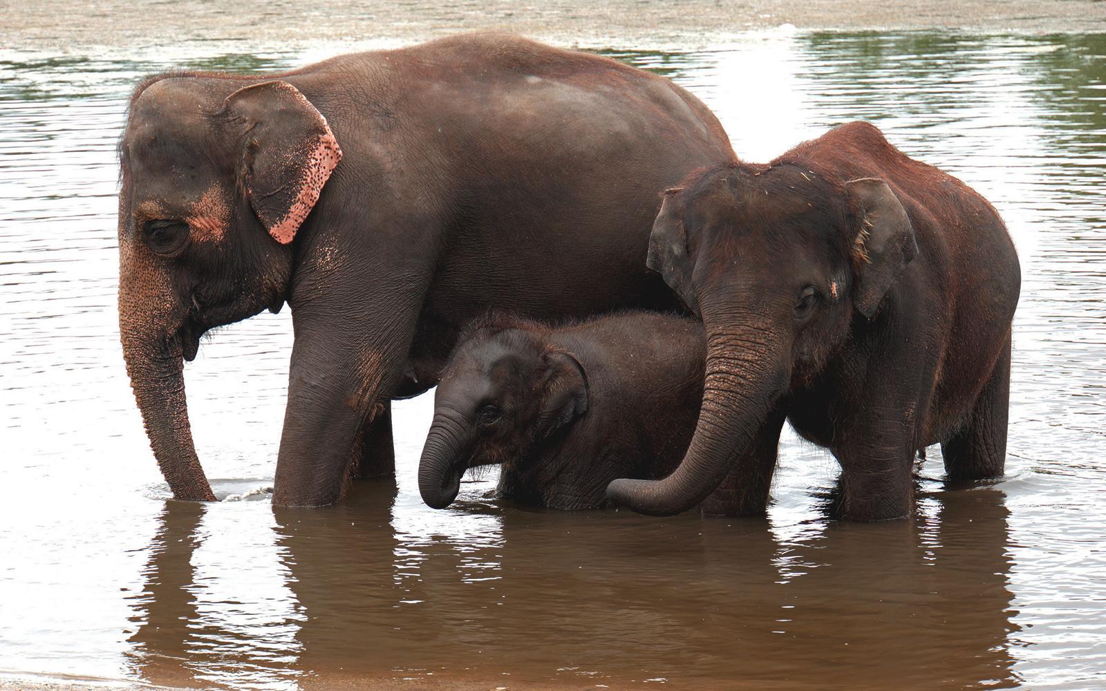 Asian Elephant Kerala Itinerary