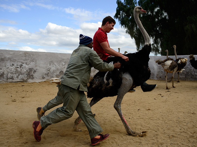 Ostrich Riding South Africa Adventure Sports