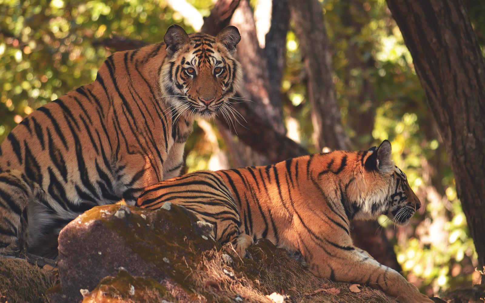 Tiger Reserve Thekkady Kerala Itinerary