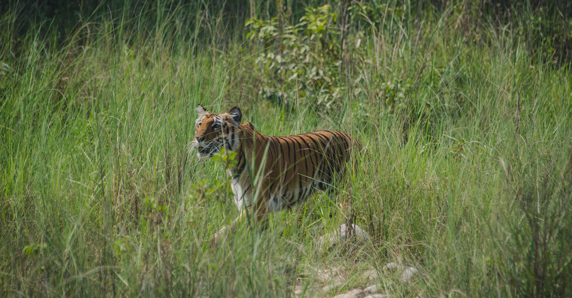 5 Offbeat Experiences in Corbett National Park