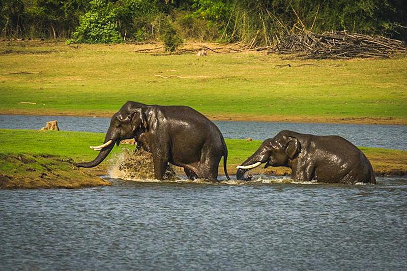 Elephant Lake Anayirangaldam Munnar