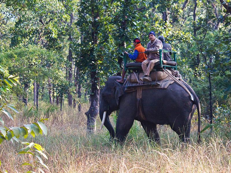 Elephant Safari Bandhavgarh