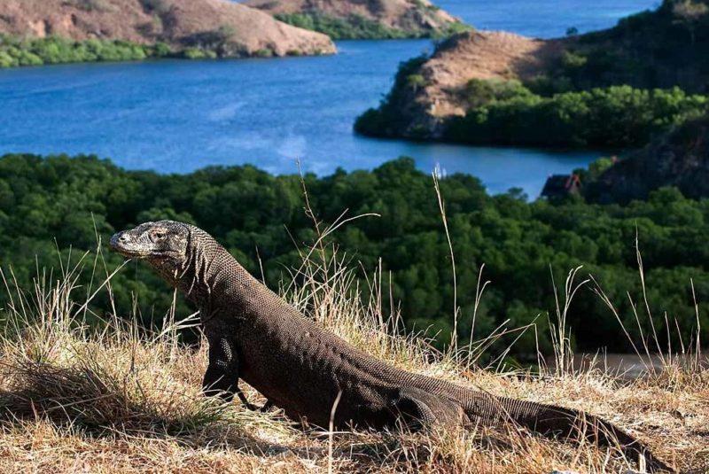 Komodo Island Habitat