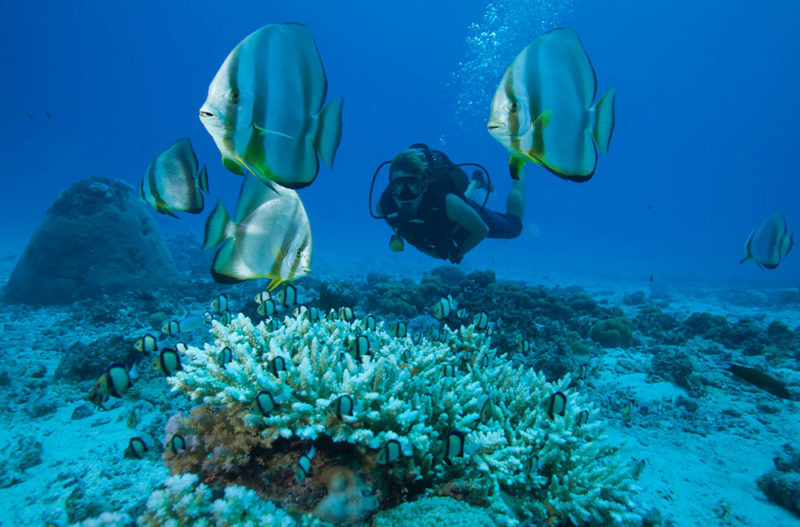 Reef Safari Seychelles