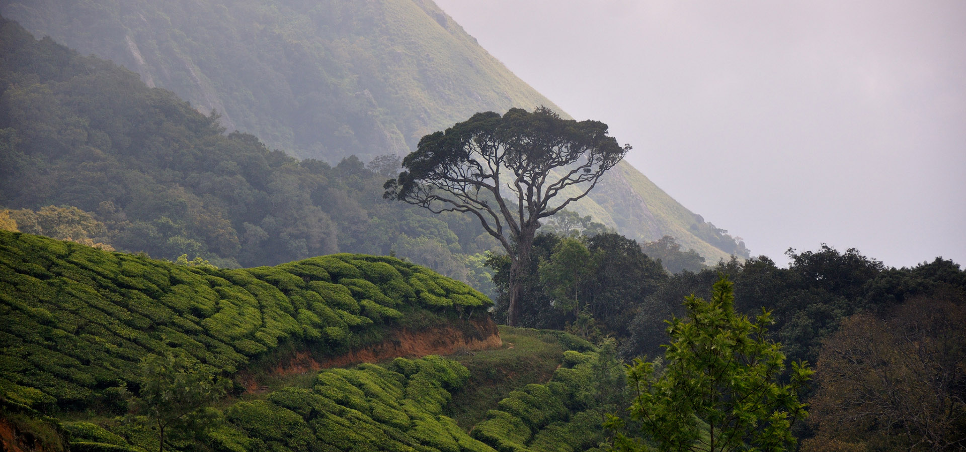 7 wow places to explore in Munnar