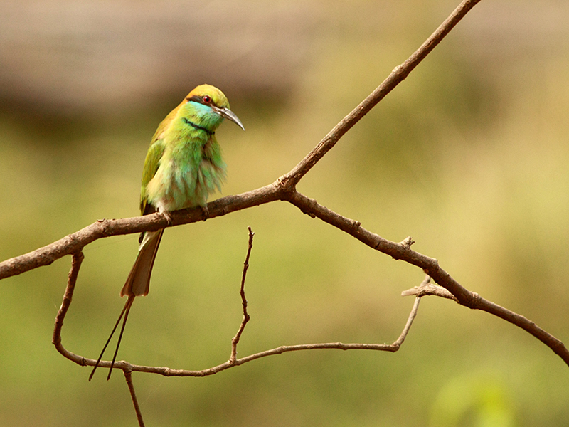birds at Bandhavgarh