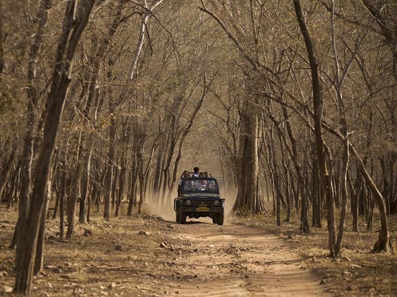 safari bandhavgarh
