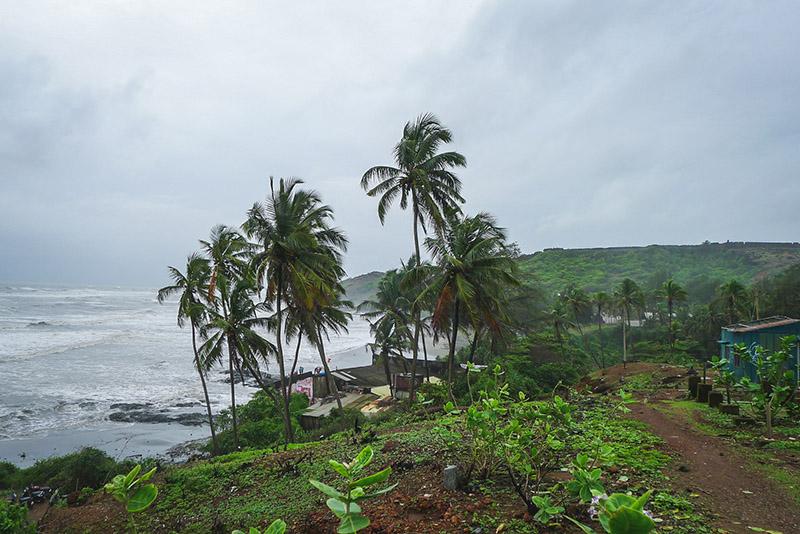 Goa Greenery