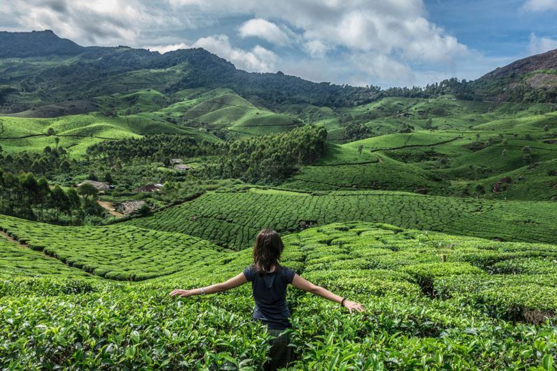 Munnar Tea Trails Kerala
