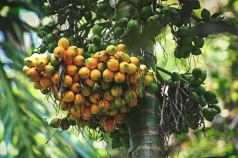 Savoi Spice Plantations Goa