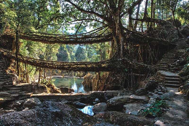 Double Decker Root Bridge Cherrapunji Meghalaya