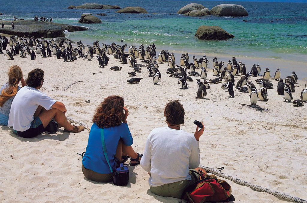 Boulders Beach Honeymoon
