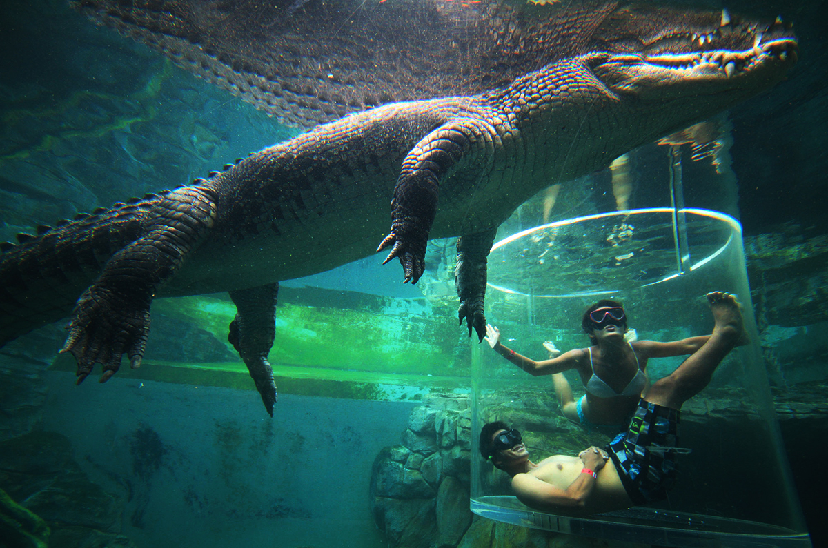 Crocodile cage Honeymoon Experience