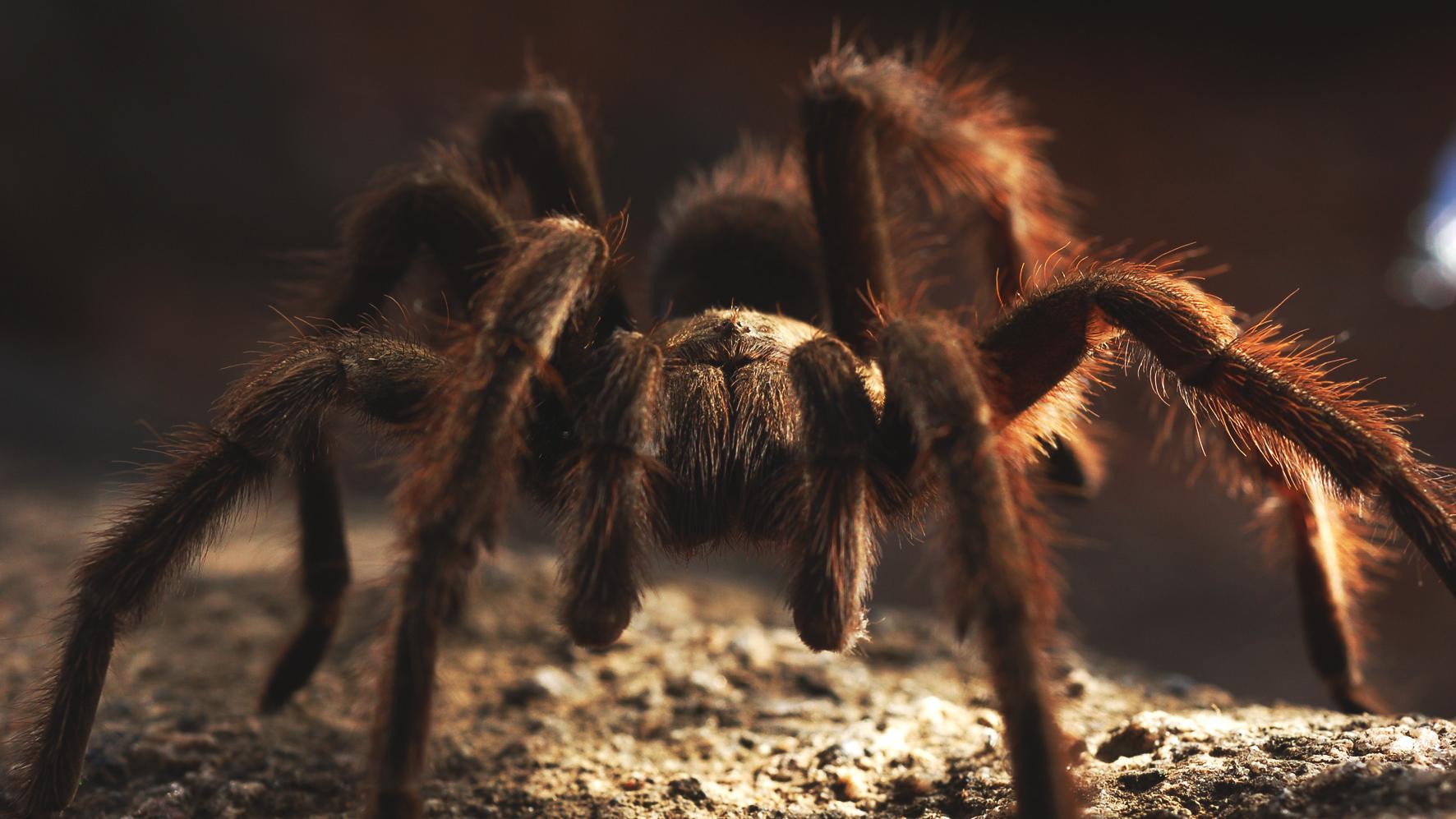 Dangerous Creatures Australia