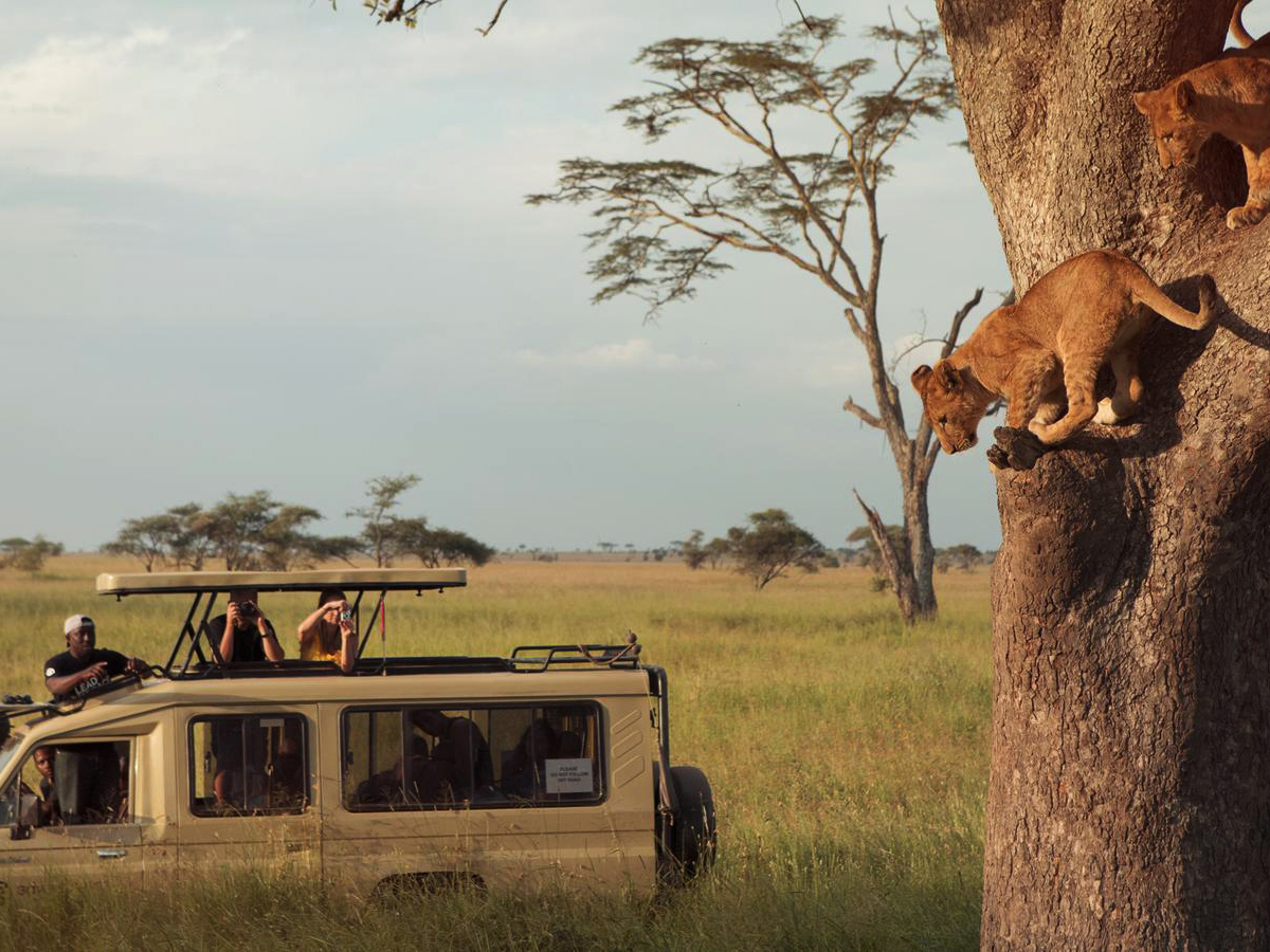 safari in kenya Honeymoon experience