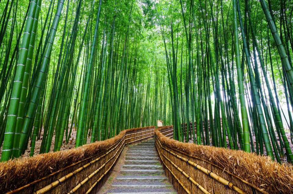 bamboo forest Arashiyama Honeymoon