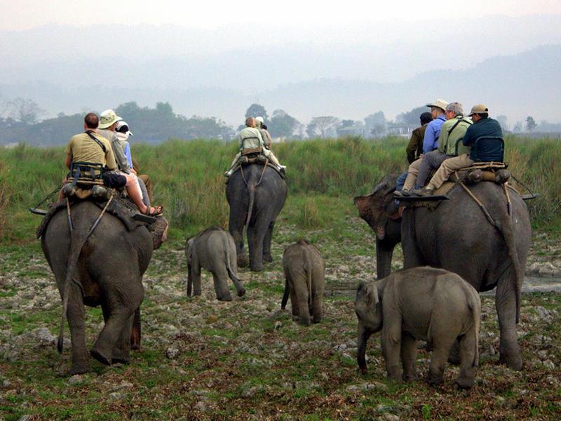 Elephant Rides Kaziranga National Park