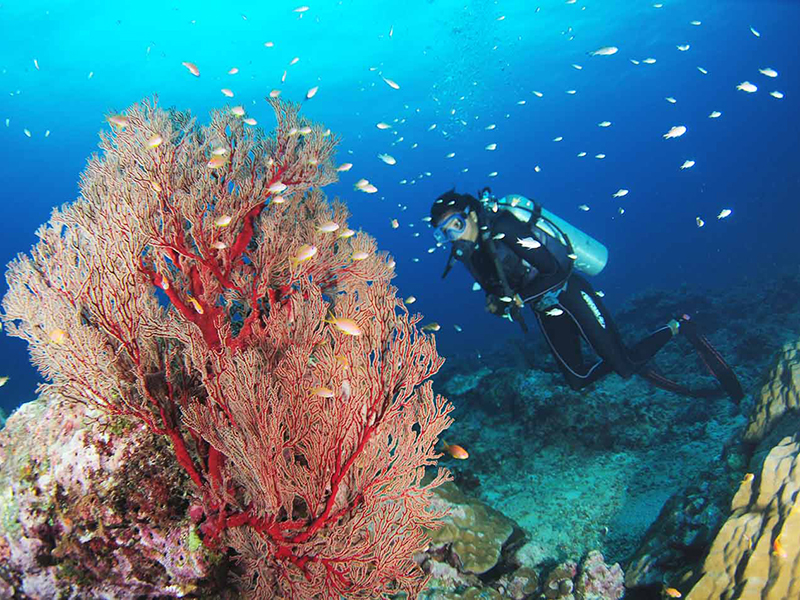 Havelock Island Diving in Andamans