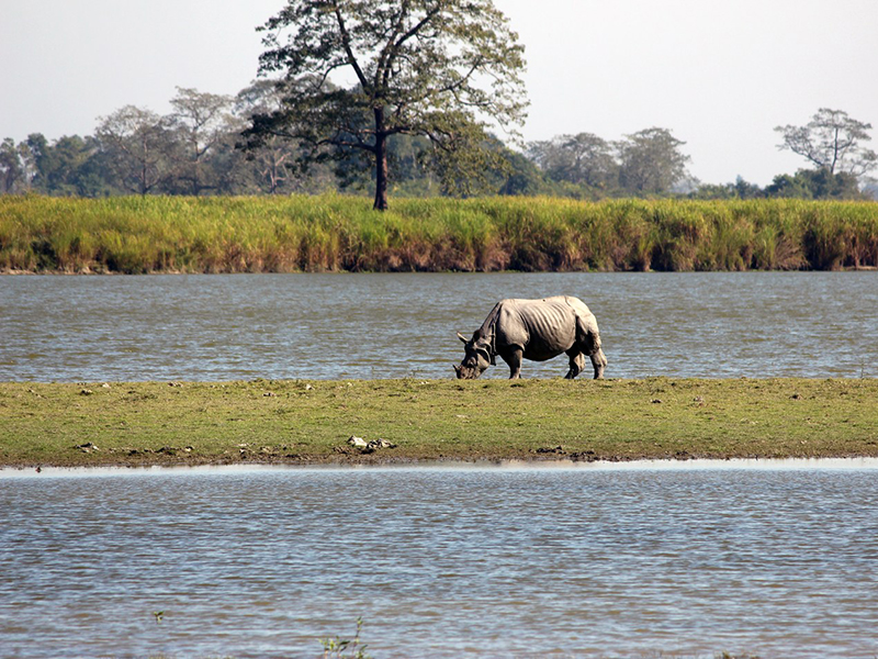 Rhino spotting Kaziranga National Park