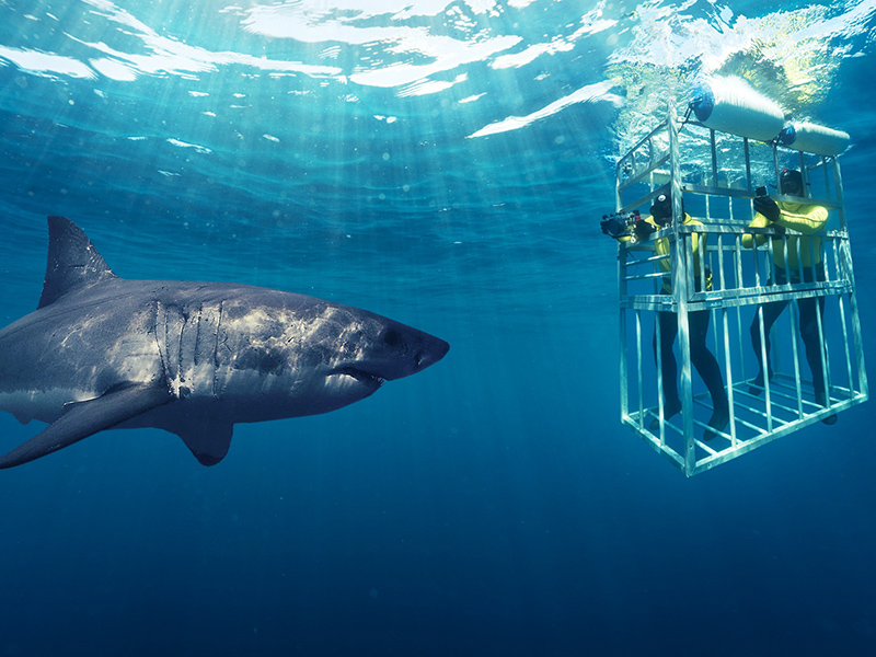 Shark cage diving South Africa Adventure Sport