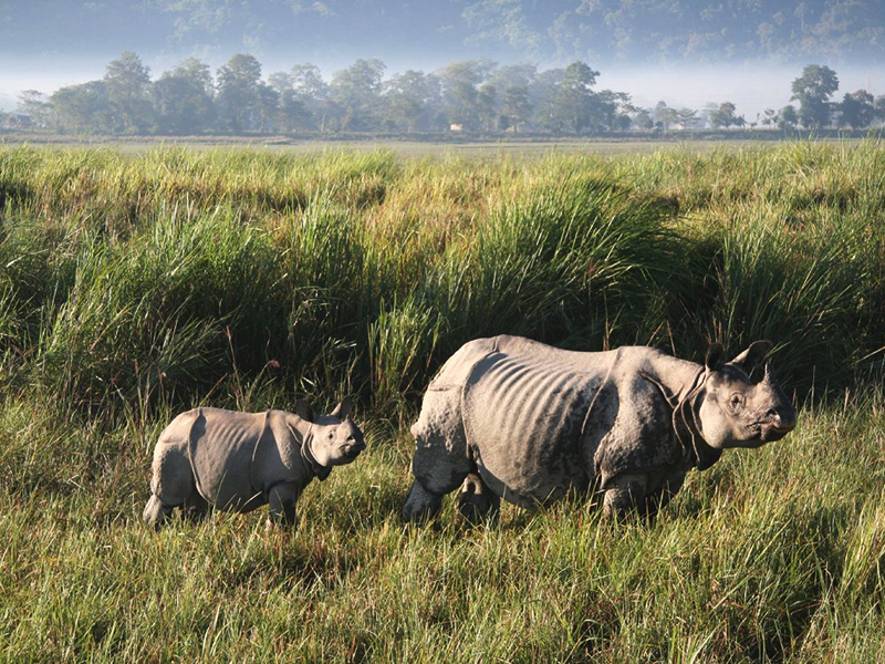 Image result for About Kaziranga