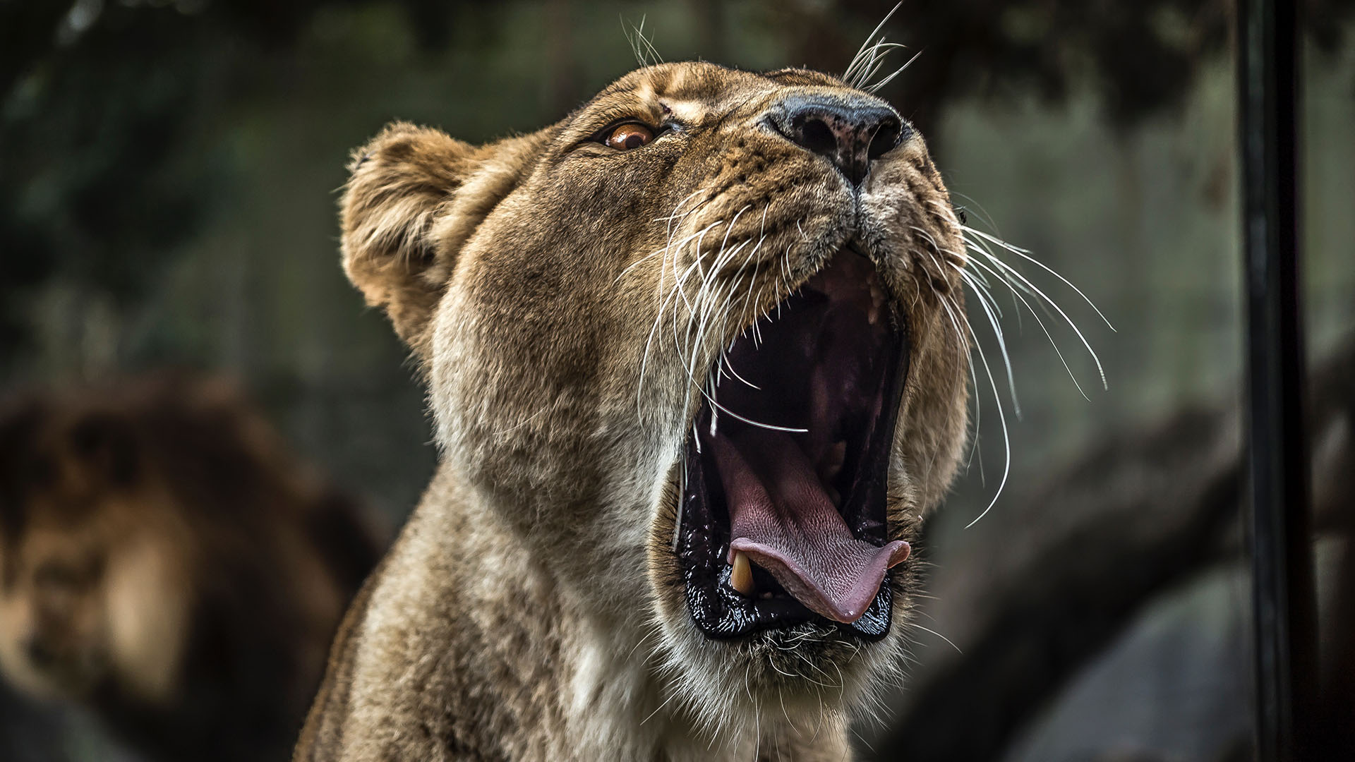 What Exactly Are the Big Five? Where to Spot Them in South Africa?