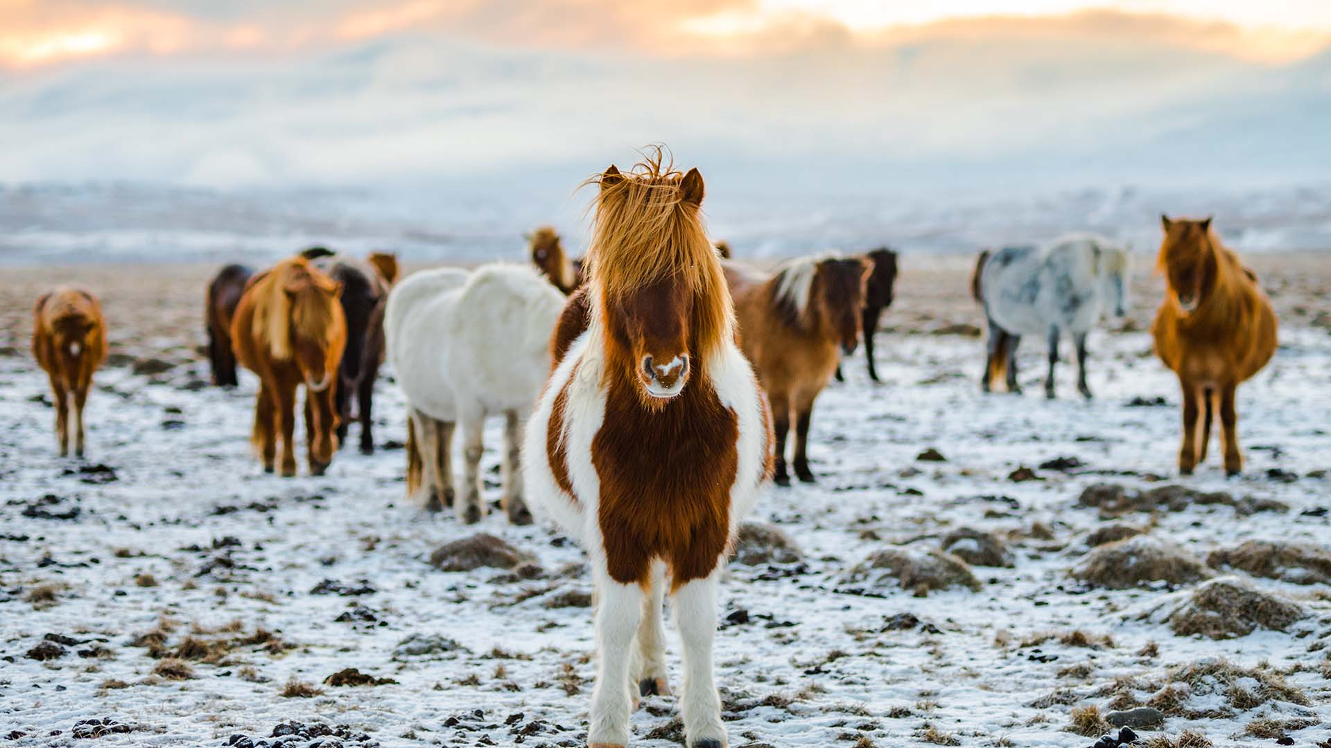 Why Iceland Is The Most Offbeat Place in Europe