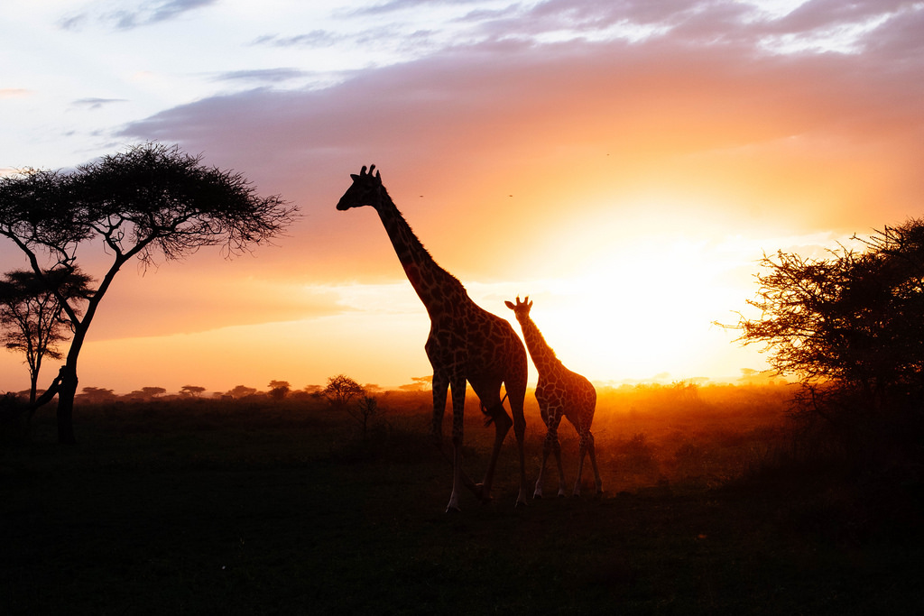 What is the best time to visit Tanzania
