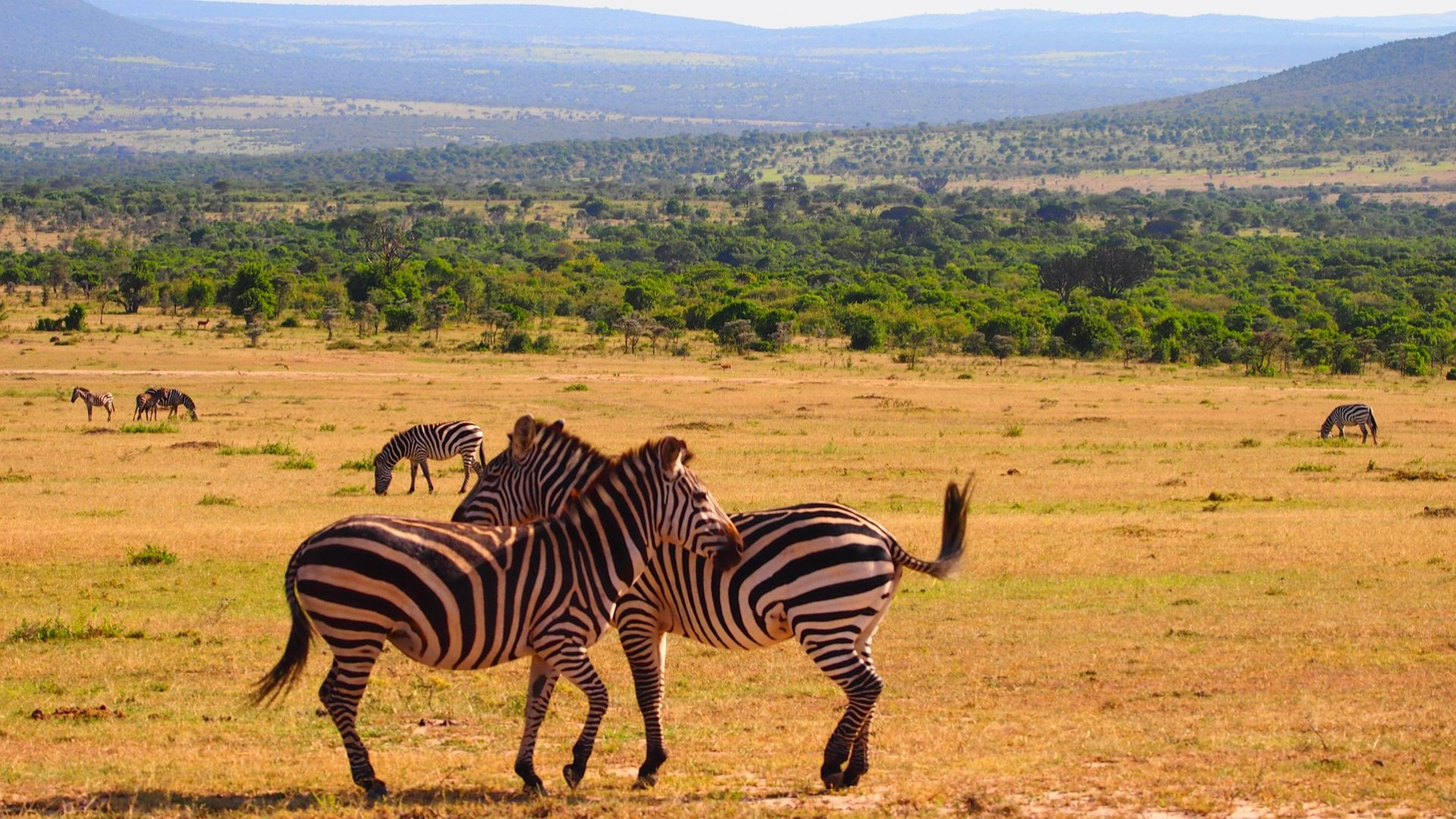 What is the best time to visit Kenya